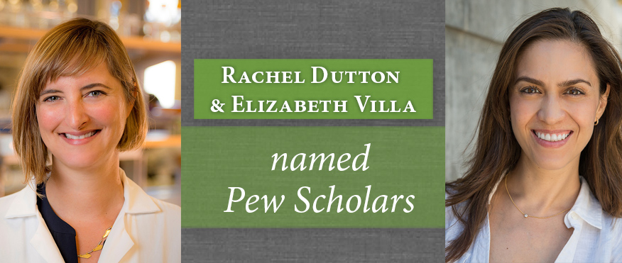 UC San Diego Biologists Named Pew Scholars