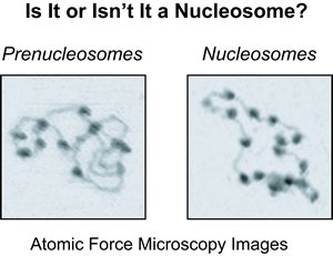 Is it or isn't it a Nucelosome?