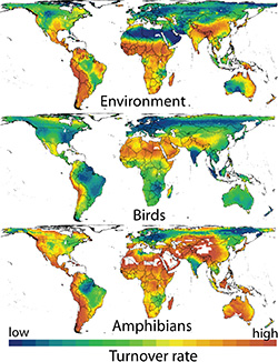Three heatmaps of the world stacked on top of each other showing the turnover rate for the environment, birds, and amphibians, respectively.