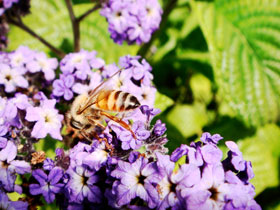 Another Photo of bee on flower