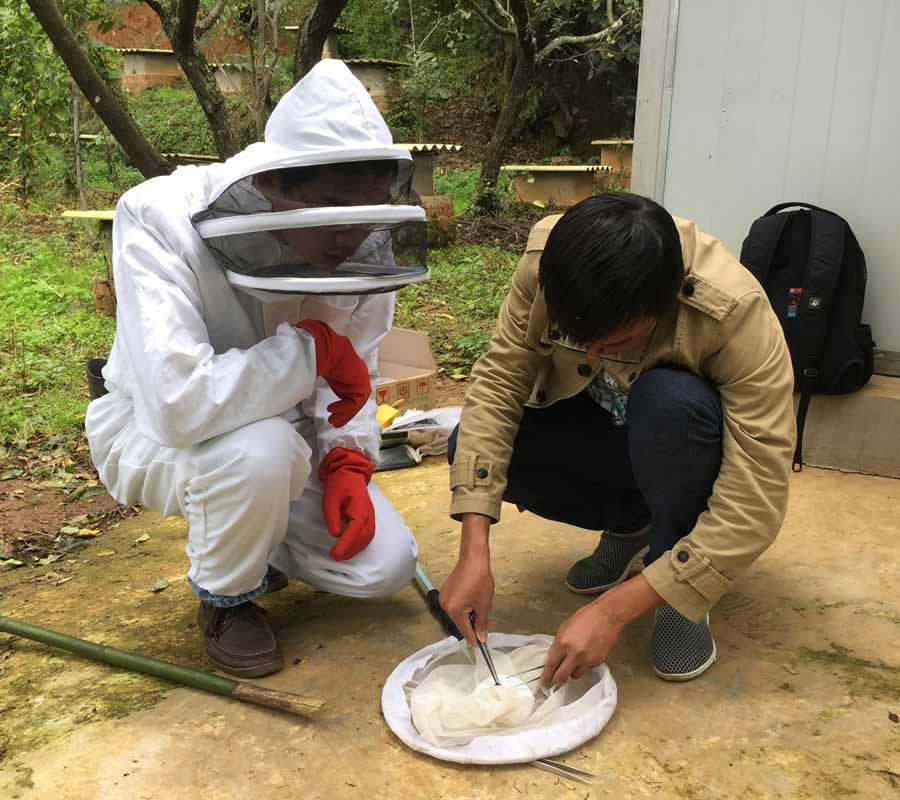two men, one in a bee keeper's uniform and one in casual clothing, use tweezers to extract a captured bee from a net