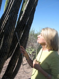 Markow standing next to a cactus and inspecting it