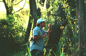 Andrew V. Suarez conducting research in a forest