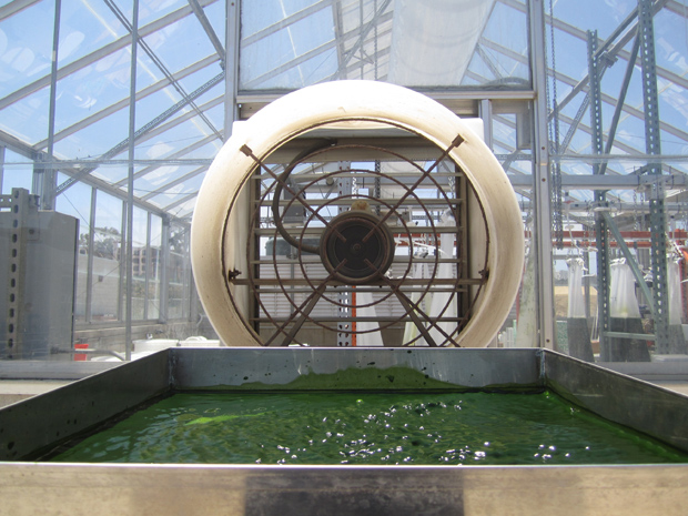 Algae drying at SD-CAB