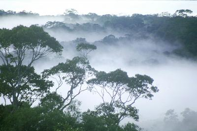 A dawn mist rises above the Amazon rainforest.