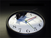 A black mouse standing on top of a black and white analog clock