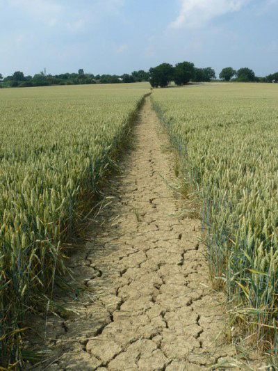 A dry road through a green field.