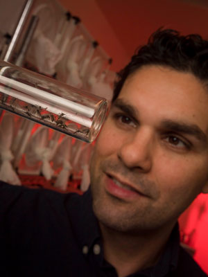 Omar Akbari looking at glass tube of small insects