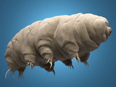 Computer rendering of a water bear