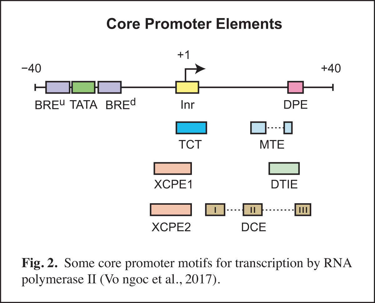 A Role for Core Promoters in Enhancer Specificity