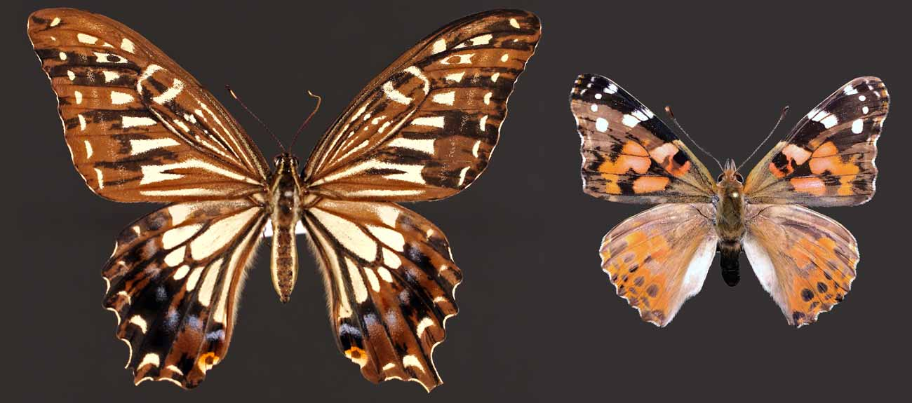 research image from perry lab of butterlies